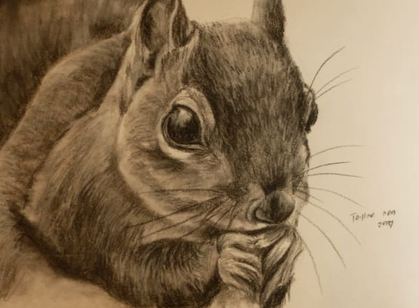 Squirrel Study (Snack Break)