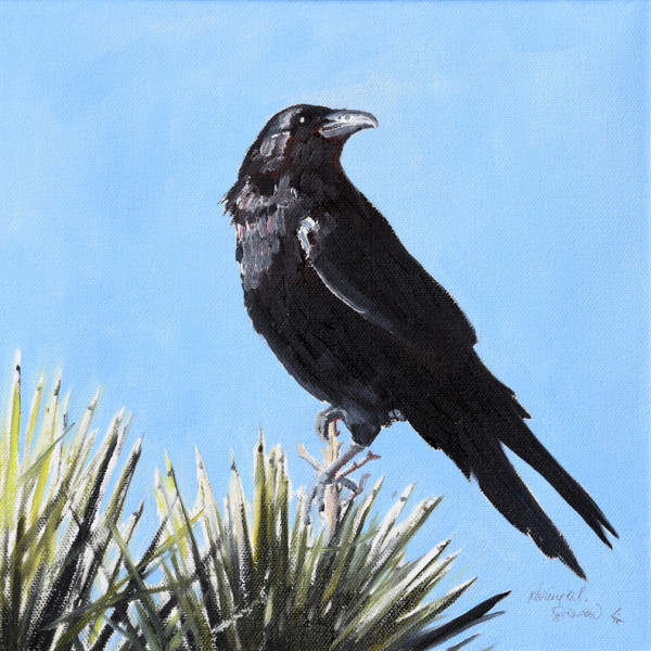 Joshua Tree Perch (raven)