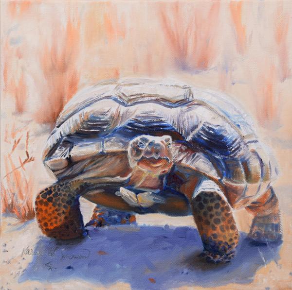 Not Shy (Desert Tortoise)