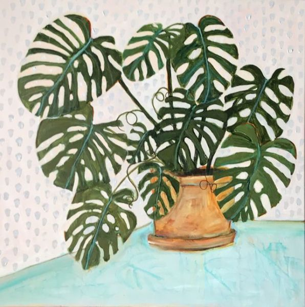 Philodendron Heart Leaf