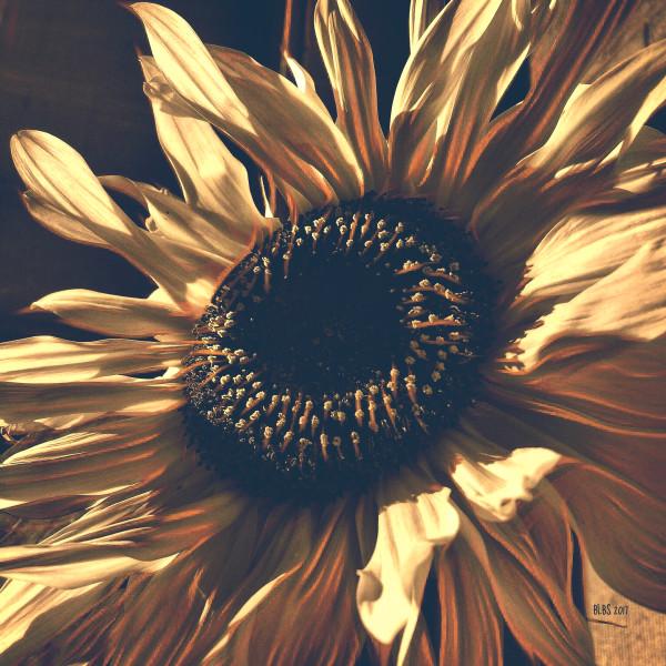 Boho Sunflower