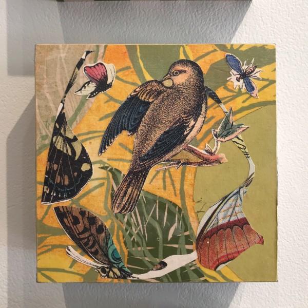 Songbird Fragments