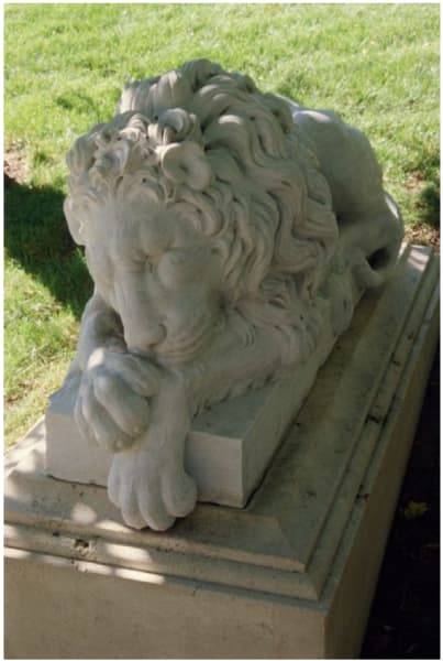 Resting Lion (nice lion)
