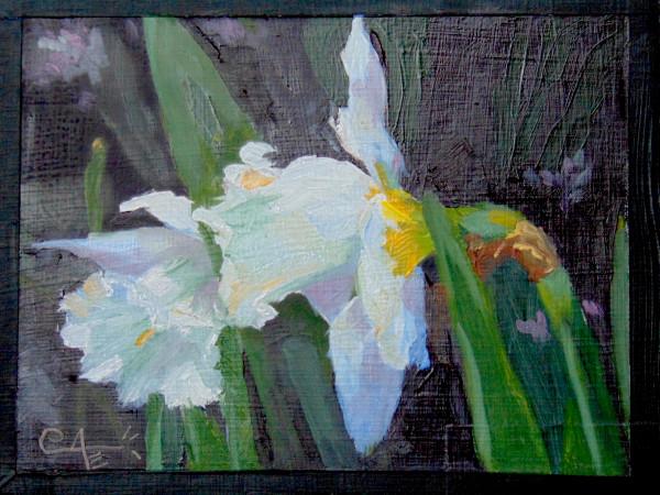 Daffodil Box