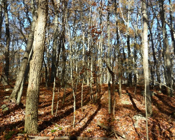 Canfield Woods 3