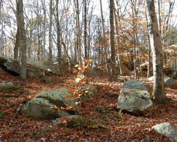 Canfield Woods 4