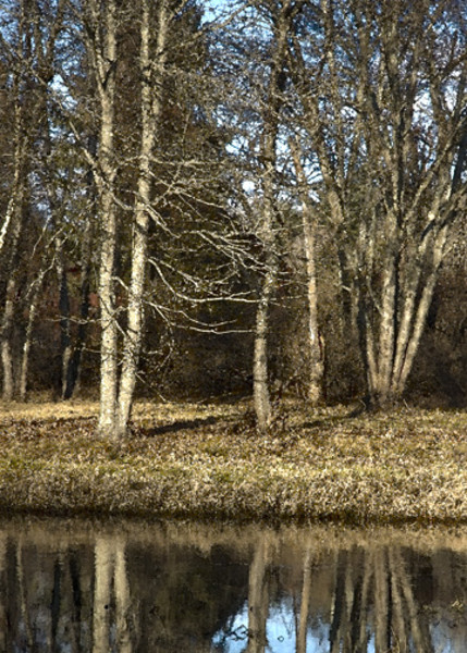 Across the Brook (MBW 8)
