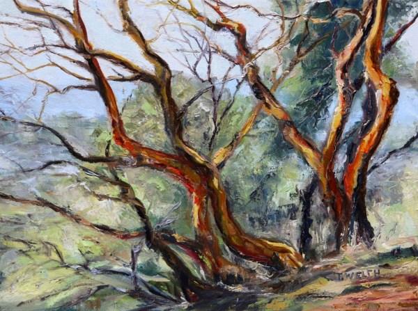 Arbutus on Mt. Parke
