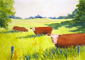 Three Red Cows