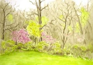 Ben's Glade, April