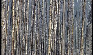 Kootenay Burn - A Four Seasons Series #20