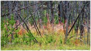 Kootenay Burn - A Four Seasons Series Image #3