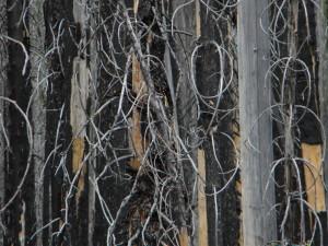 Kootenay Burn - A Four Seasons Series #21