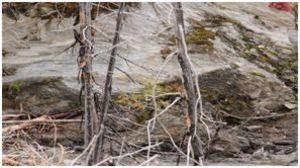 Kootenay Burn - A Four Seasons Series Image #11