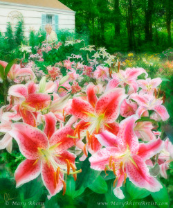 130302 ahern marys dream garden 960px72 phqzs7