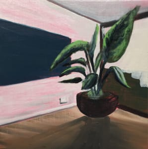 Plant in a room