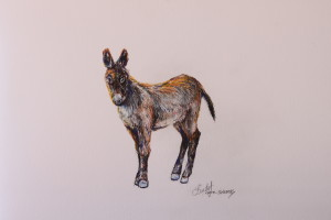 2a17_sunny_burro_8x10_ink_and_colored_pencil_lindy_c_severns_pi2hpc