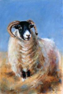 Northumberland blackface sheep small wikrle