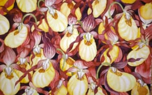 Yellow Lady Slippers IV