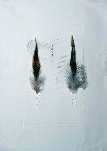 Feathers 6