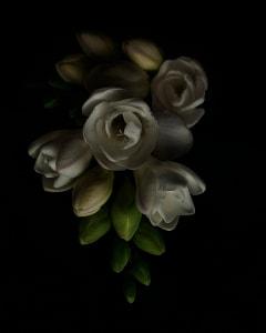 White_flower_3_web_y7cqsh