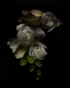 White_flower_4_web_yzmwq7