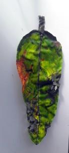Archetypal Leaf 148