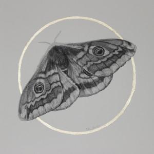 Emperor moth tzwfuy