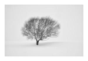 Tree in snow, near Naseby