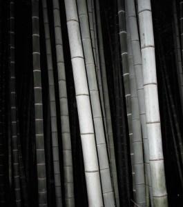 The wind blows bamboo sings mgqitn