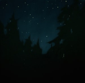 Stars through the Forest