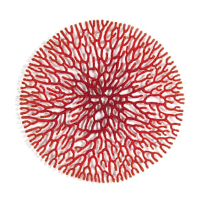 Coral Network 2