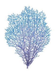 Florescent Coral Fan