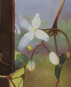 Evergreen clematis iii uxn1qu