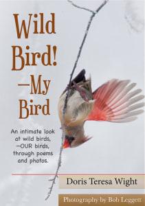 Wild Bird, My Bird