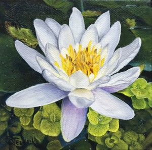 Caymanian Water Lily