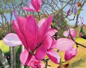 Tulip Tree Blossoms