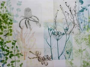 Banksia flower Hakia seeds and fine greenery
