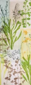 Banksia Pod, Hakea Pod and cotton lavender