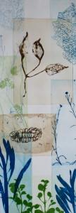 Seed pod branch and Banskia pod