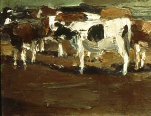 Cows Early