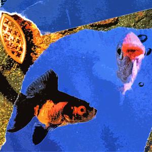 Fishy Fishy Five and Six (1/10)