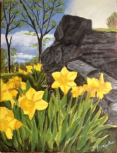 Daffodils, May Flowers