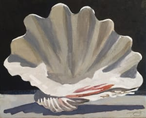 Clam Shell Study
