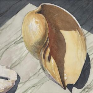 Cymbium glans 082016 6x6 watercolor gouache hm1ce2