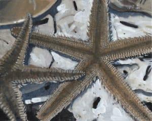 Starfish Study