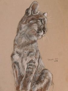 Cougar sketch 8x10 lnbteh