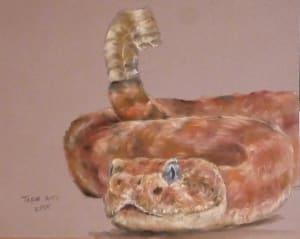 Diamondback Rattlesnake pastel study