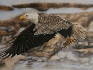 Gliding through 12x9 250 bald eagle flying in colored pencil czrsl2