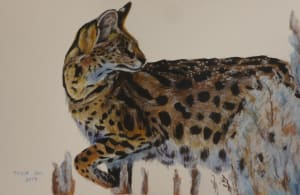 Ocelot in Snow (Color Study)